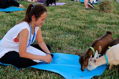Chloe Khaw watches a group of goats snap up the food at the end of her mat during Goat Yoga
