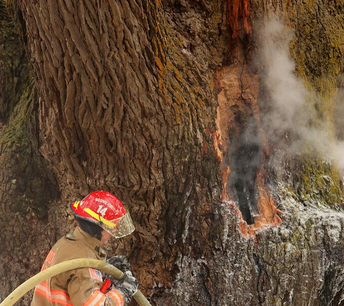 A member of the Boone County Fire Protection District flushes water down tree
