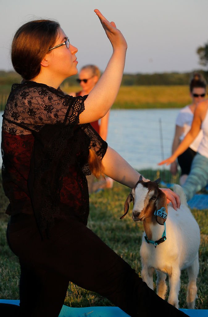 Yoga instructor Sarah Judd pets Lucinda the goat while guiding participants to the next yoga pose