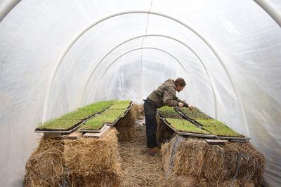 Tony Minnick checks some of the growing seedlings in the soil blocks (copy)