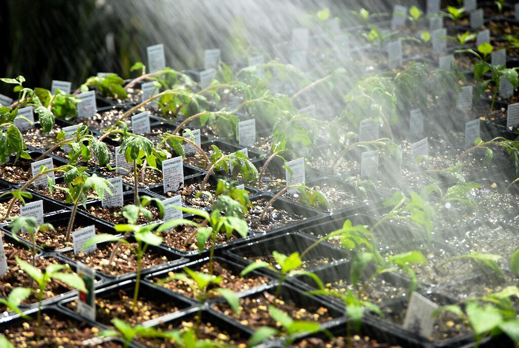 Helmi Sheely, owner of Helmi's Gardens, waters growing plants