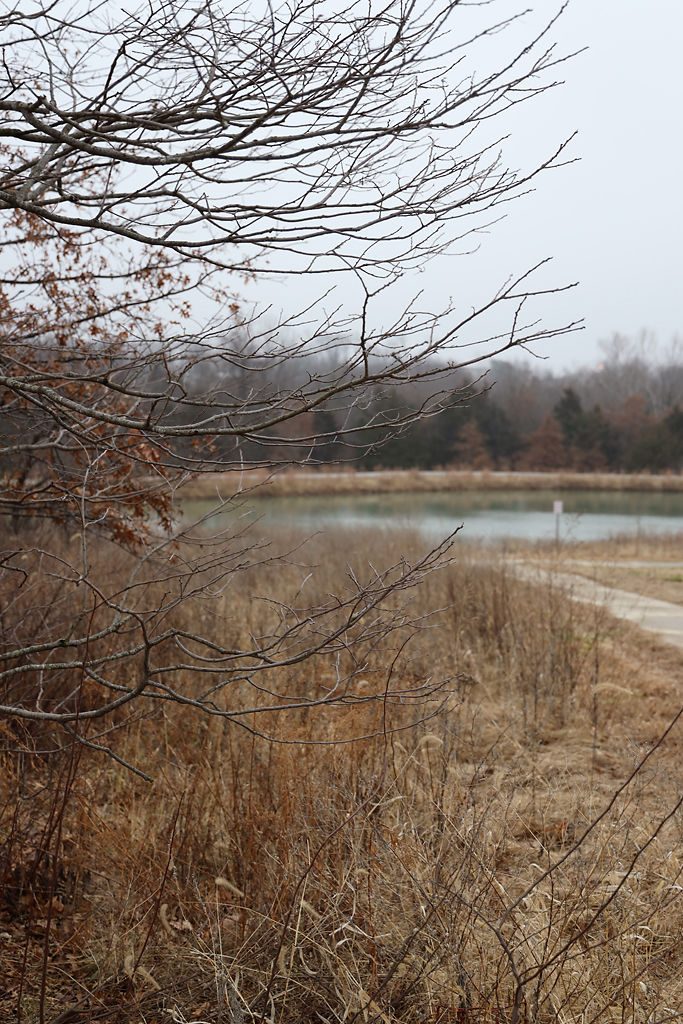 A pond at Norma Sutherland Smith Park sits undisturbed
