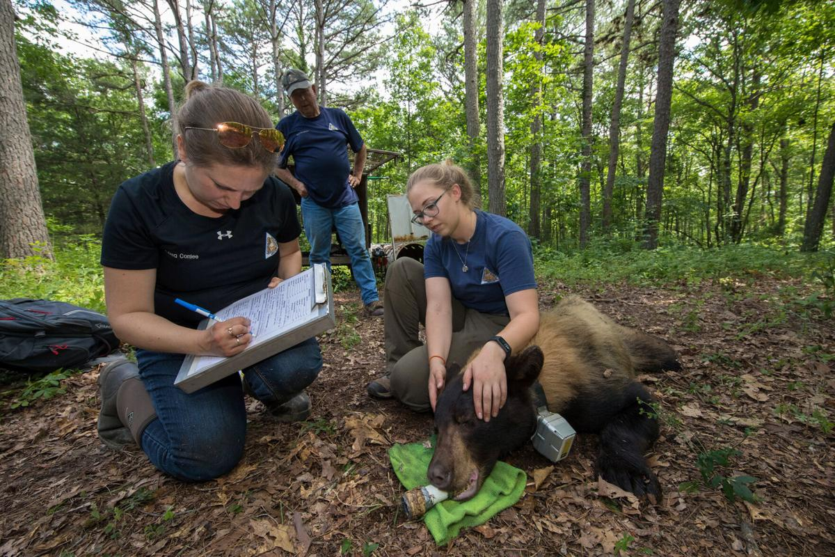 Staff collect biological measurements