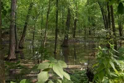 MKT wetlands project would serve trail users and benefit urban wildlife
