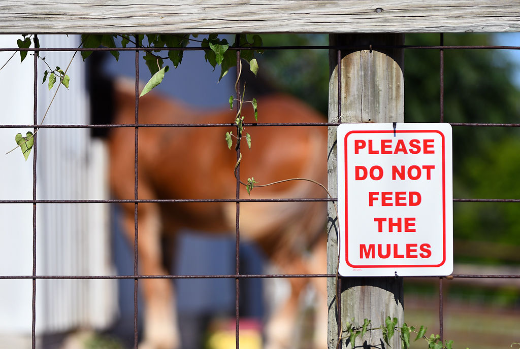 "A ""Don't Feed"" sign hangs on Friday, July 10, 2020, on a fence at the MU Mule Club barn"