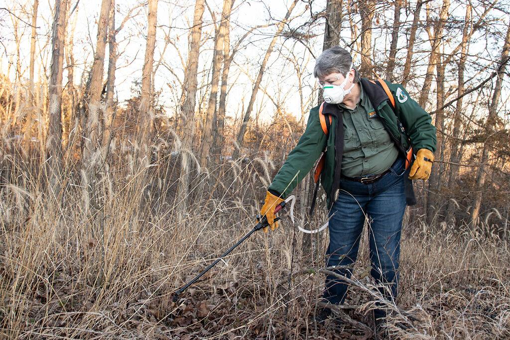 Roxie Campbell sprays herbicide