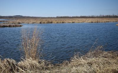 Documentary recalls 30-year-old fight for wetlands wastewater treatment at Eagle Bluffs