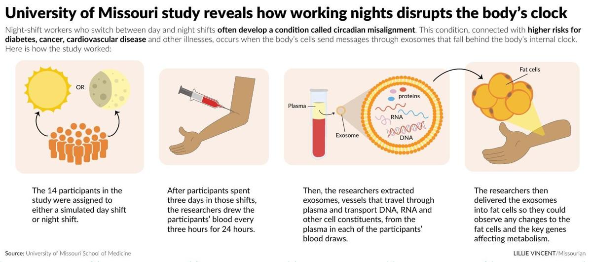 University of Missouri study reveals how working nights disrupts the body's clock
