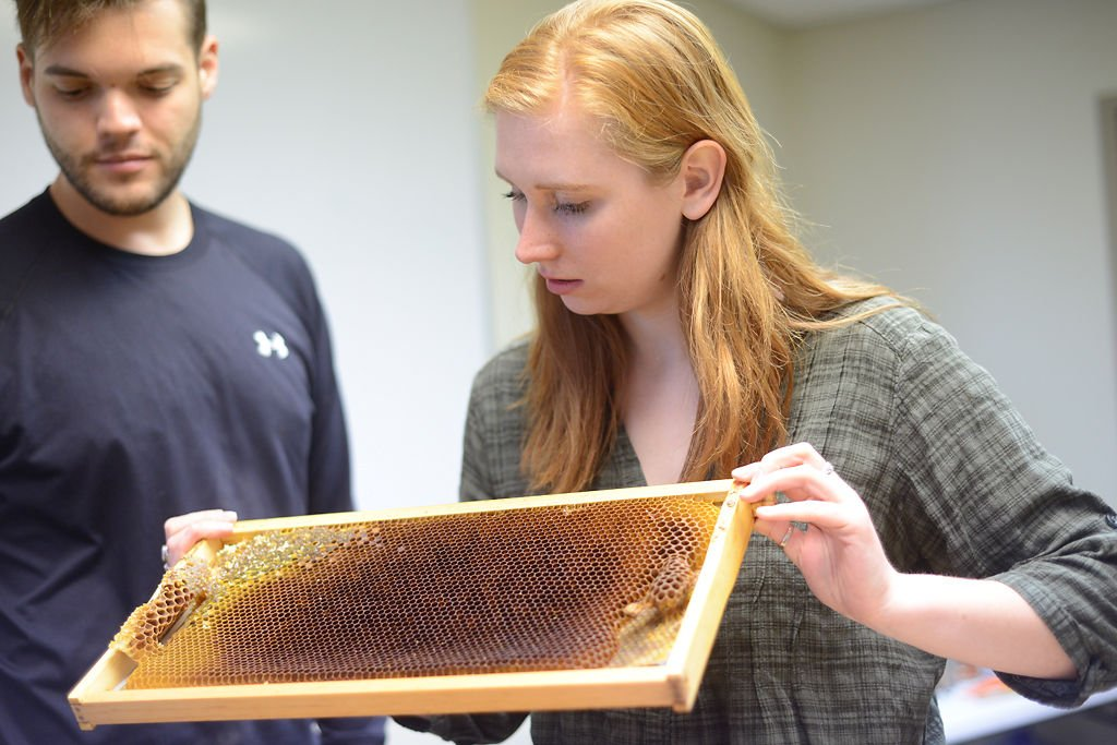 Megan Tyminski looks at honeycomb