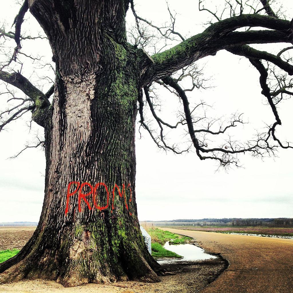 Champion bur oak vandalized with spray paint | Local