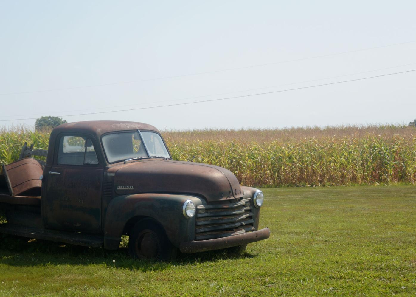 An old Chevrolet truck sits out by a cornfield