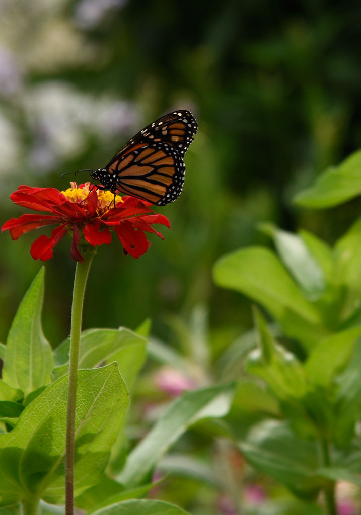 At Jefferson Farm and Gardens, visitors learn gardening and ...