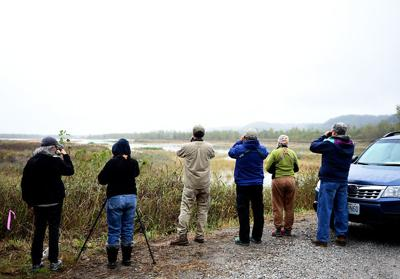 """A tailgate party for birders: """"Big Sit"""" unites bird watchers"""