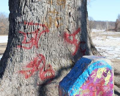 Graffiti covers the base of the McBaine Bur Oak tree in January