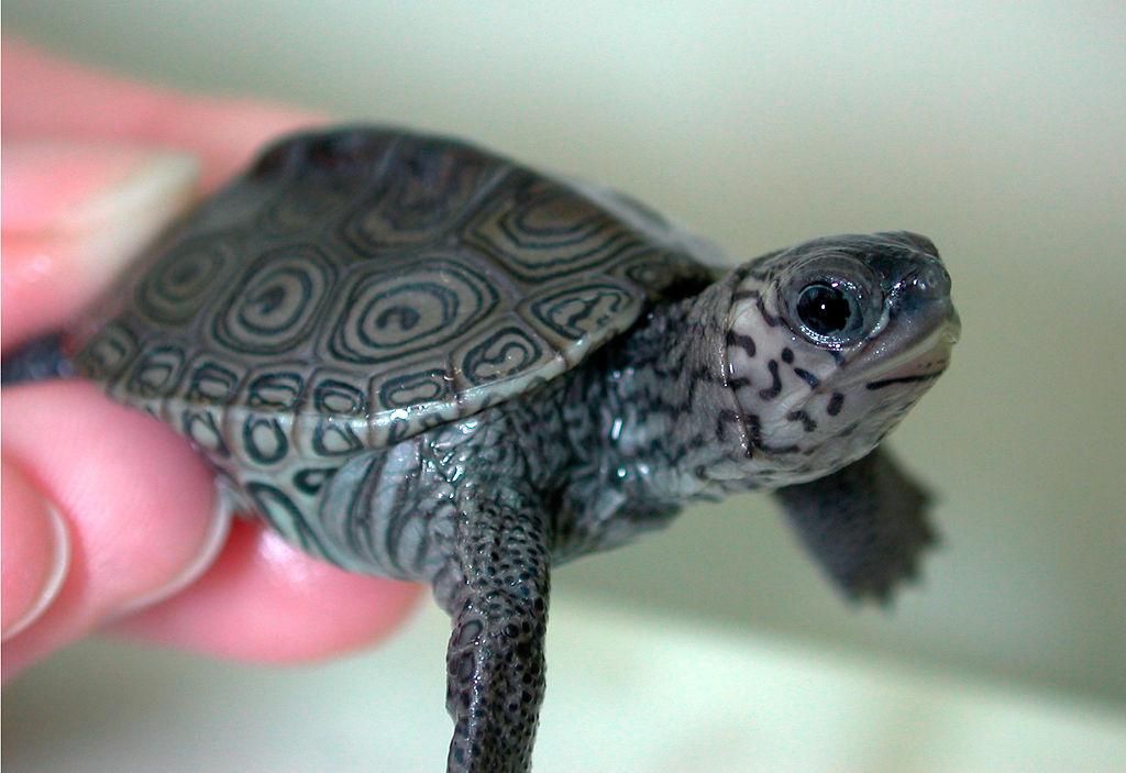 Turtle bone density is studied