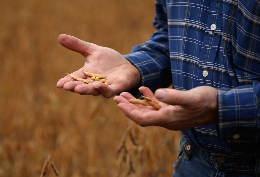 Dennis Shryock checks the hardness of several soybean seed pods