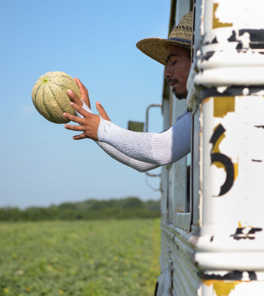 A worker catches a cantaloupe as it is thrown into a bus