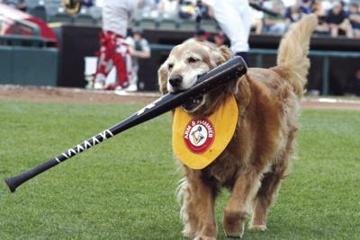 Trenton Thunder bat dog retires