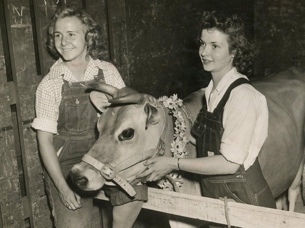 Elsie the Cow img128