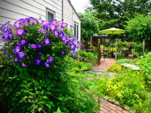 Trenton cultural and city life blooms in June