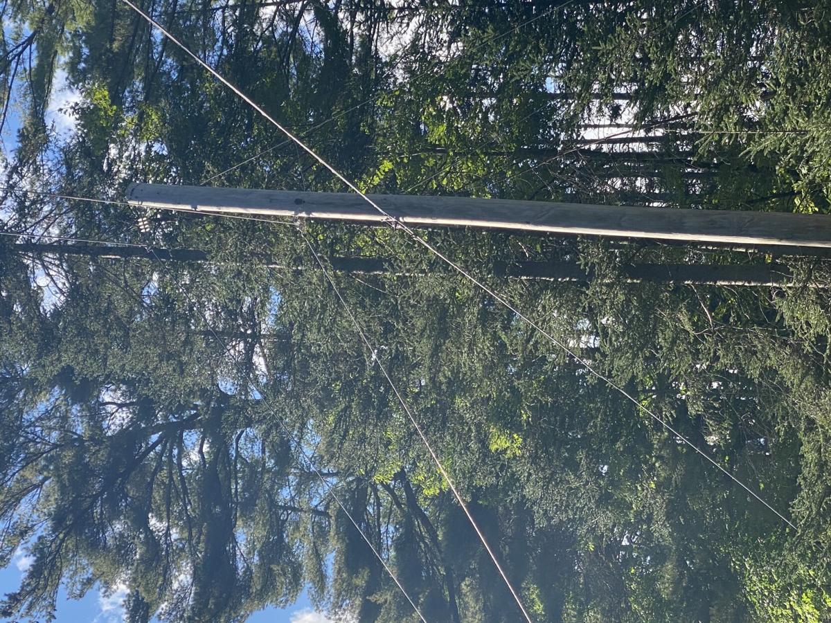 POWER LINES THREAD THROUGH TREES