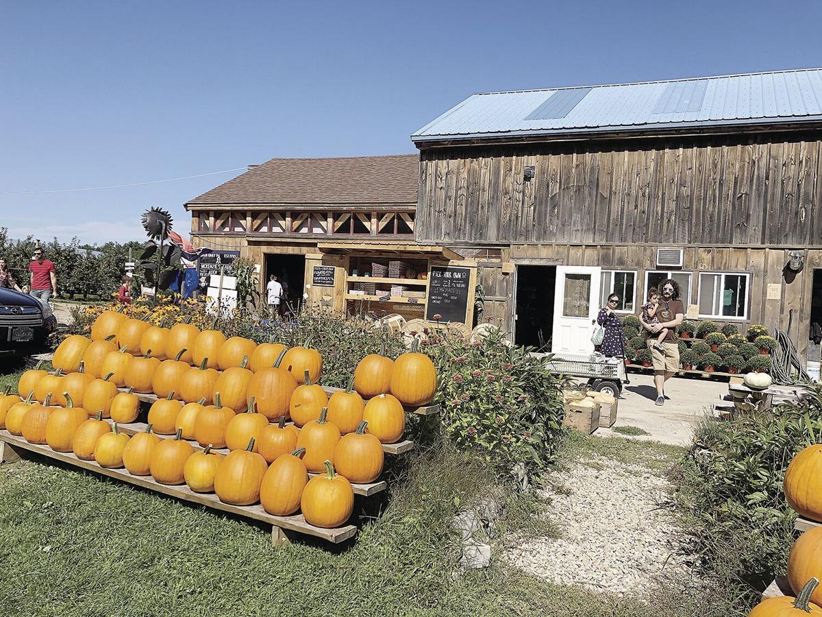 Mckenzie orchard pumpkins