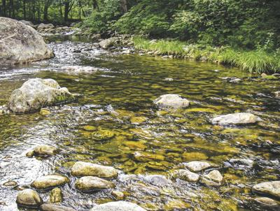 8-29-2020 Valley Angler-Trout stream