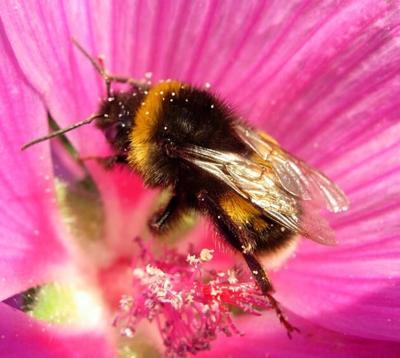 Gardeners, Nurseries urged to protect bees