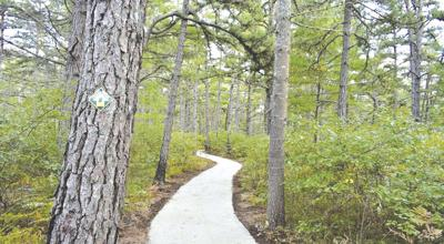 4-13-19 Parsons-Ossipee Pine Barrens Trail