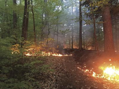 Fire at Whitaker Woods