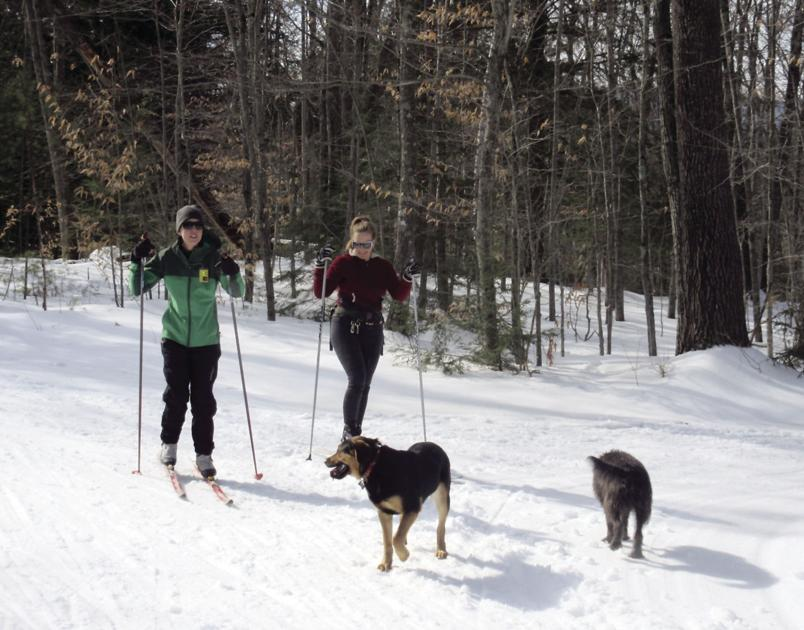 Tele-Talk question: Do you think the town of Conway should adopt a leash law for Whitaker Woods?