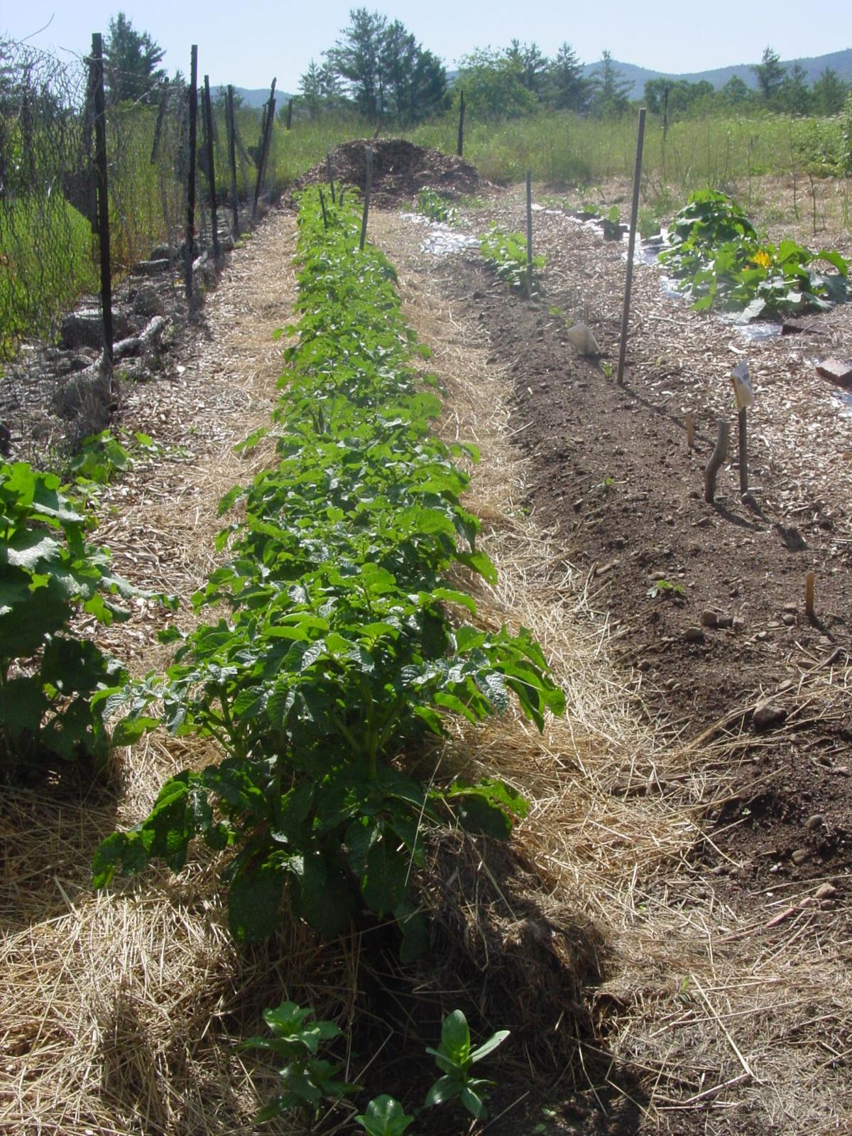 More Thoughts While Weeding: Mulching to maintain soil