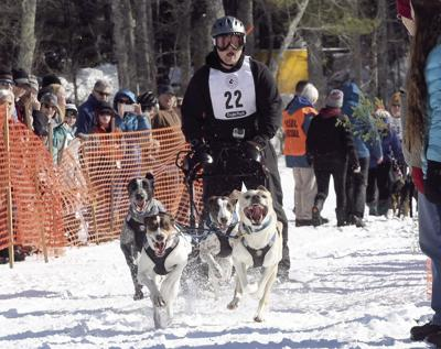 3-3-19 Tamworth sled dogs