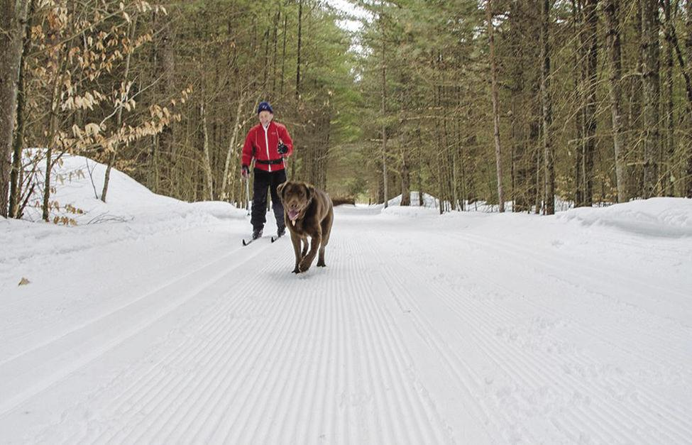 Nordic Tracks: Waxing and winding through Whitaker Woods