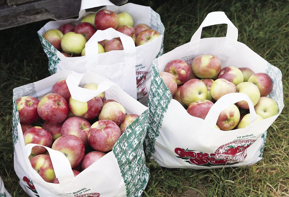 09-12-21 Hatch's bags of apples medium
