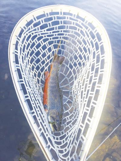 George Liset-Brook trout