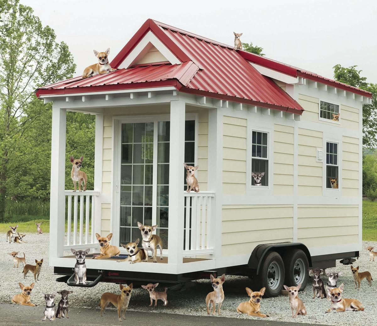 Tiny Houses Pets on best pigs for pets, small mammal pets, dwarf mice as pets, tiny houses on wheels, alot of pets, tiny houseon wheels floor plans, tiny home, tiny dogs, animal pets, strange but cute pets, small chameleon pets, home pets, tiny food, tiny cats, california pets, best cats for pets, australia pets, small pigs as pets,