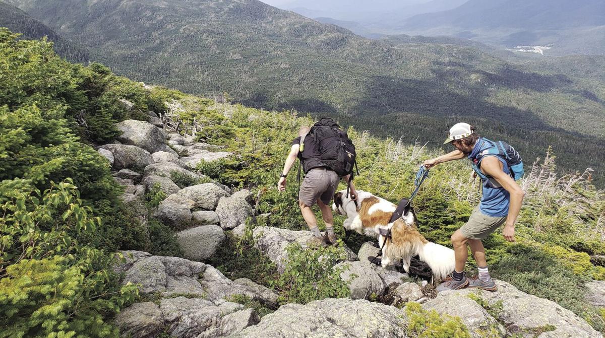 Saint Bernard rescue wide shot