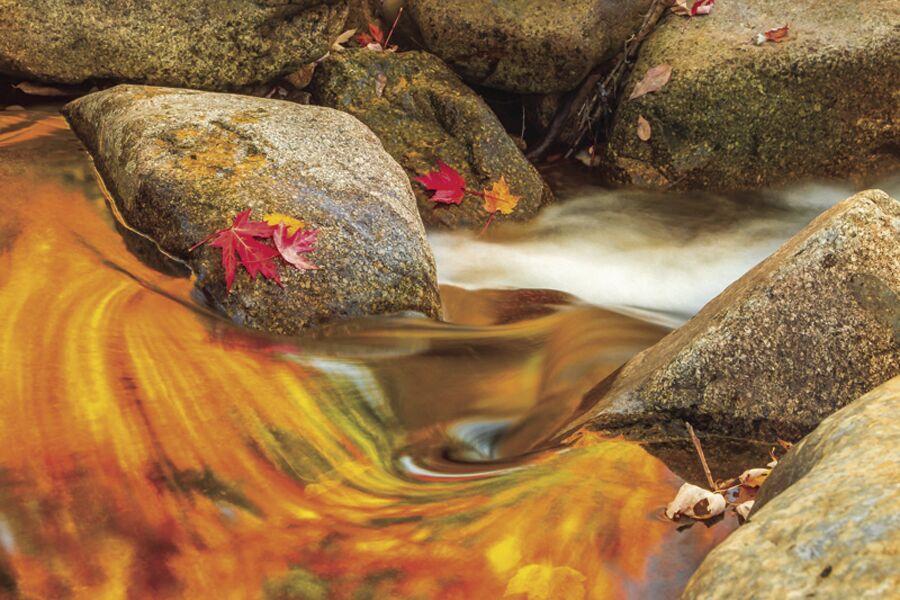 Frank Ficken-Fall Stream