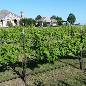 Caudalie Crest Winery