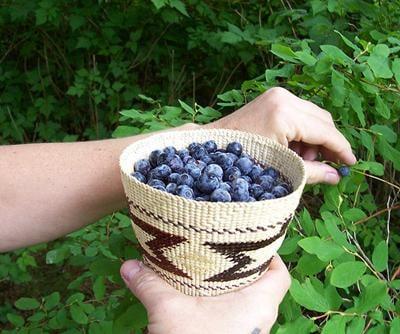 Pick Berries by the Bushel