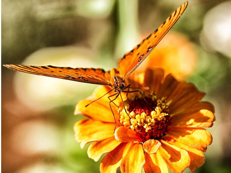 floyd-butterfly2-800x600.jpg