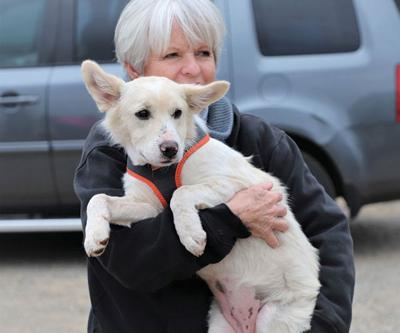 Texas Abandoned Dogs Find Homes in New Jersey