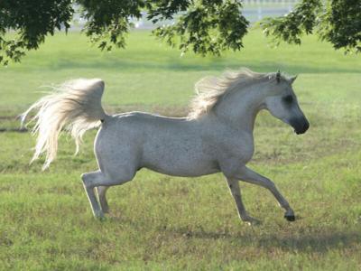celebrating-horses.jpg