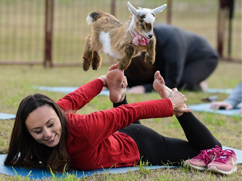 All Kidding Aside, Goat Yoga is Fun
