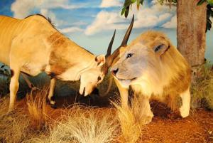 Harber Wildlife Museum