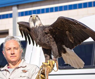 Eagle Capital of Texas Ready for Annual Festival