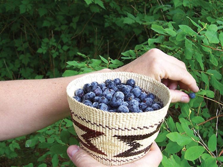 blueberries800x600