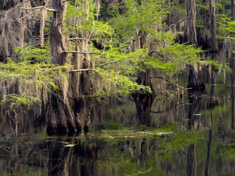 View Majestic Scenery at Caddo Lake State Park