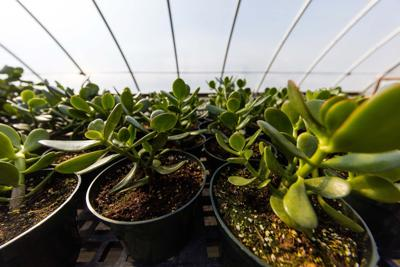 Technology helps ATU spring plant sale tradition continue